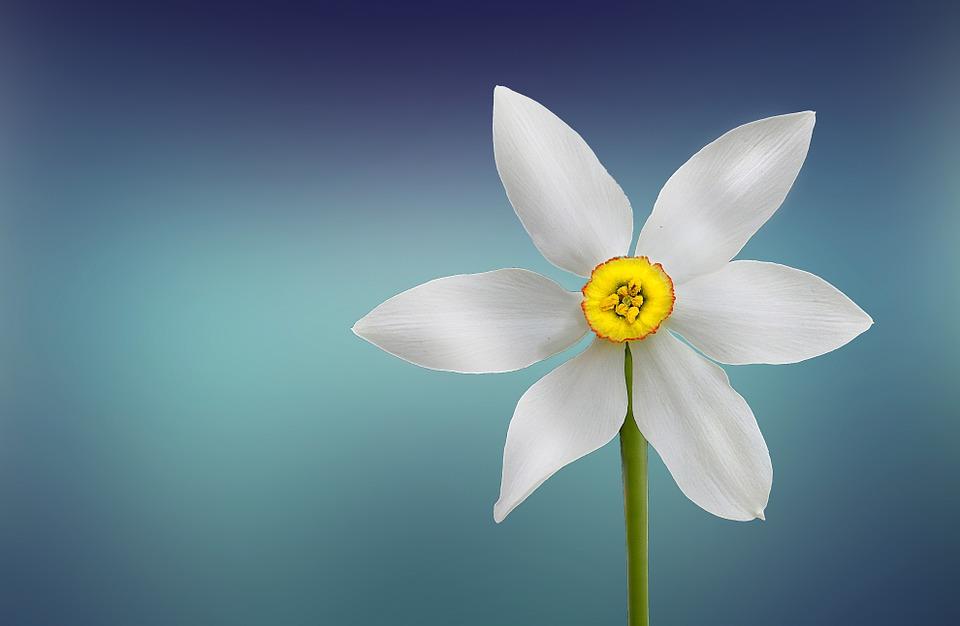 flower-729513_960_720